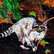 Rascally Raccoon Art Print by Will Borden
