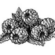 Raspberries Image Art Print