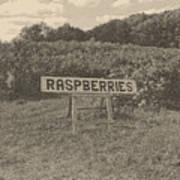 Raspberry Fields  Art Print