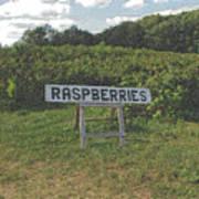 Raspberry Fields Three Art Print