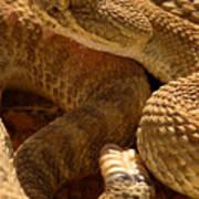 Rattlesnake And Rattle Art Print