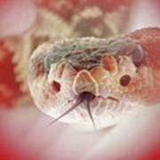Rattlesnake Red Art Print