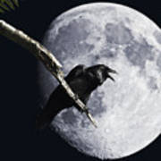 Raven Barking At The Moon Art Print by Wingsdomain Art and Photography