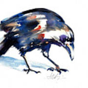 Raven Shadow From Vancouver Art Print