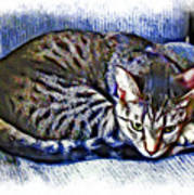 Ready For Napping Art Print