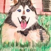 Rebel The Husky  Art Print