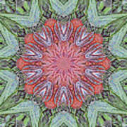 Red Amaryllis Trio Kaleidoscope Art Print