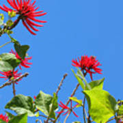 Red And Green San Diego Flowers Art Print