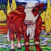 Red And White Bull Calf Art Print