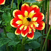 Red And Yellow Flower With Bee Art Print