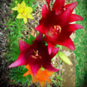 Red And Yellow Garden Flowers Art Print