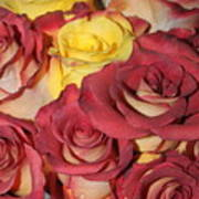 Red And Yellow Roses Art Print