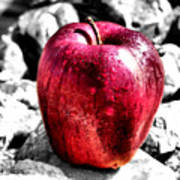 Red Apple Art Print by Karen M Scovill