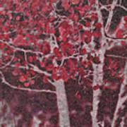 Red Aspen Art Print