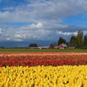 Red Barn Tulip Farm Art Print