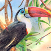 Red-billed Toucan Art Print