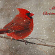 Red Bird In Snow Christmas Card Art Print