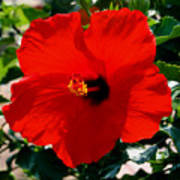 Red Bloomers Art Print