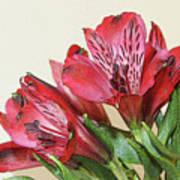 Red Blooms Poster Art Art Print