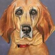 Red Bone Coon Hound Art Print