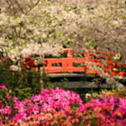 Red Bridge And Blossoms Art Print