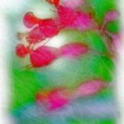 Red Buckeye Art Print
