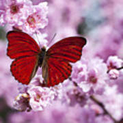 Red Butterfly On Plum  Blossom Branch Art Print