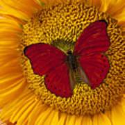 Red Butterfly On Sunflower Art Print
