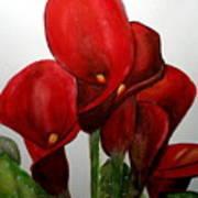 Red Callas Art Print