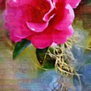 Red Camellia Art Print