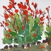 Red Canna  Art Print