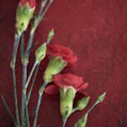 Red Carnation Stems Art Print