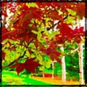 Red Chinese Maple Leaf's Art Print
