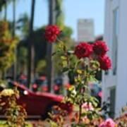 Red Coronado Roses Art Print