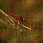 Red Dragonfly Dining Art Print