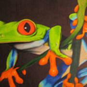 Red Eye Tree Frog Art Print