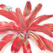 Red-eyed Tree Frog On Bromeliad Art Print