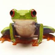 Red-eyed Tree Frog Art Print