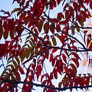 Red Fall Colors Art Print