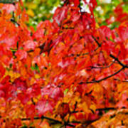 Red Fall Leaves Art Print