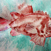 Red Fish Art Print