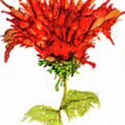 Red Flower 2 Art Print