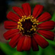 Red Flower 8 Art Print