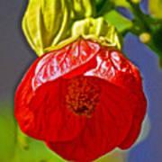 Red Flower At Pilgrim Place  In Claremont-california Art Print