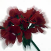 Red Flower Motion Art Print