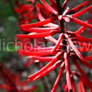 Red Flower Under The Light Of The Setting Sun Art Print