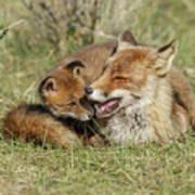 Red Fox Cub Love Art Print