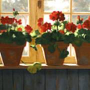 Red Geraniums Basking Print by Linda Jacobus