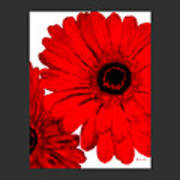Red Gerber Border     Digital Art  Art Print