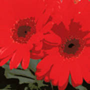 Red Gerberas Art Print